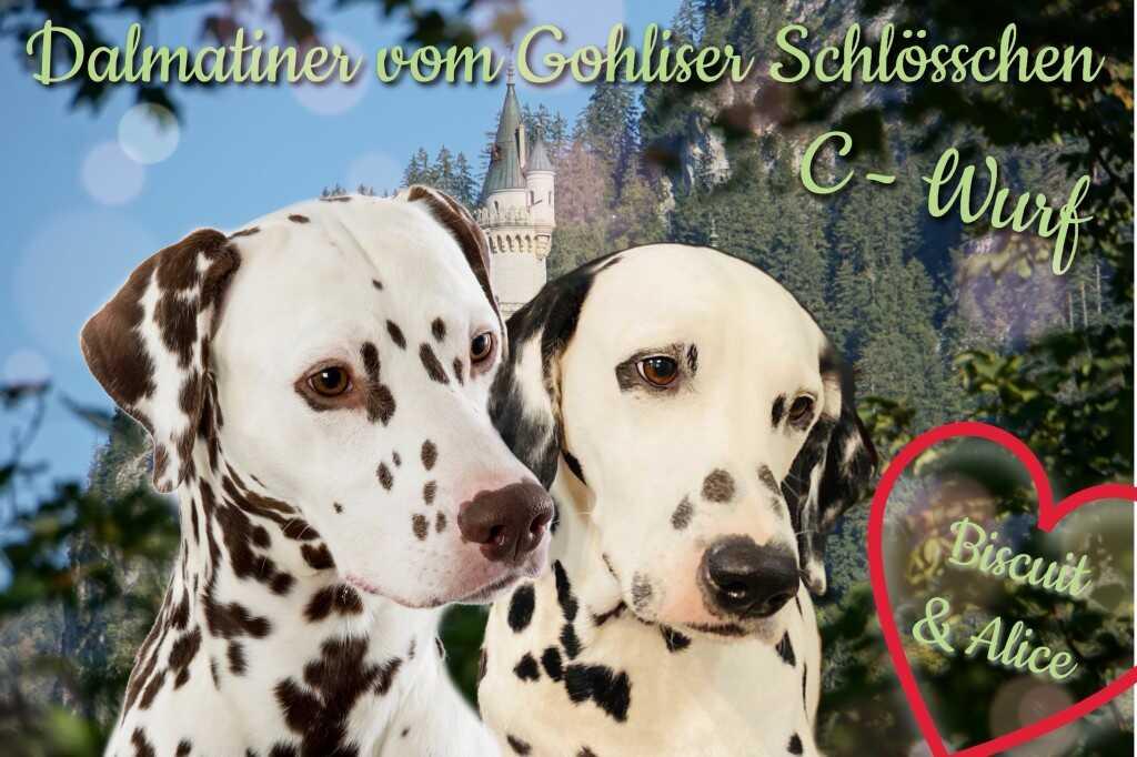 Dalmatiner vom Gohliser Schlösschen