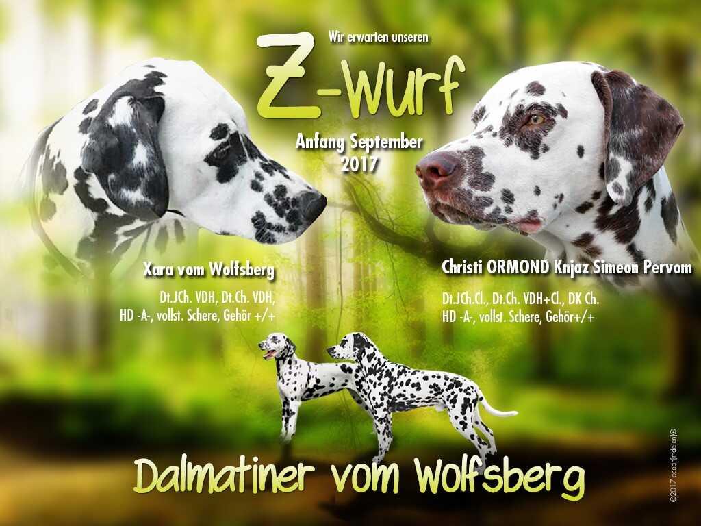 Dalmatiner vom Wolfsberg