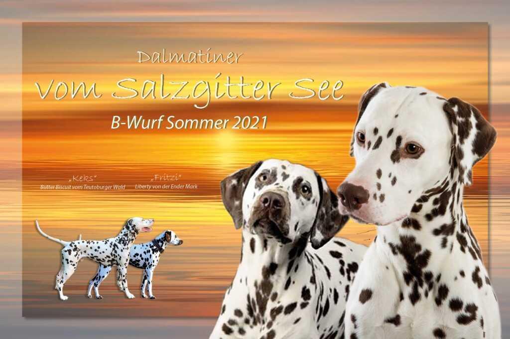 Dalmatiner vom Salzgitter See