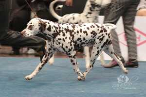 WORLD DOG SHOW 2017, Leipzig