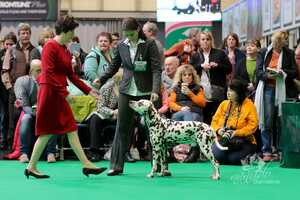 CRUFTS 2018, Birmingham (UK)